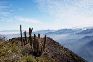 Cactus en las laderas del Pochoco (foto: http://www.manzani.cl/)