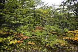 vegetación sector senderos